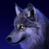 wolf iran